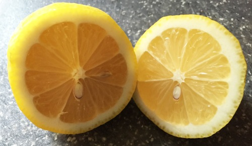 2016-02-13 07.51.23-cut lemon