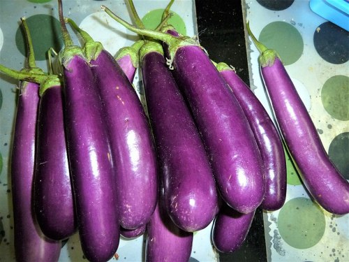 Japanese egg plants